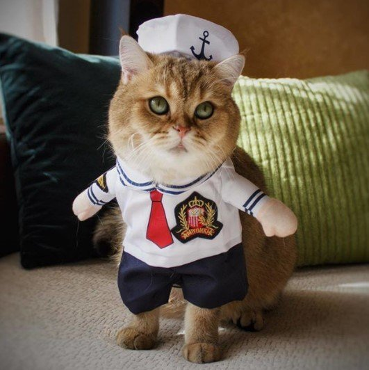 Funny-Cat-Outfits19 Funny Outfits For Cats – 20 Most Funny Clothes For Cats