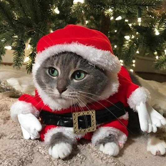 Funny-Cat-Outfits20 Funny Outfits For Cats – 20 Most Funny Clothes For Cats