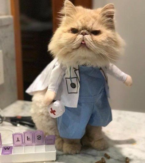 Funny-Cat-Outfits3 Funny Outfits For Cats – 20 Most Funny Clothes For Cats