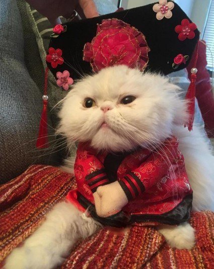Funny-Cat-Outfits16 Funny Outfits For Cats – 20 Most Funny Clothes For Cats