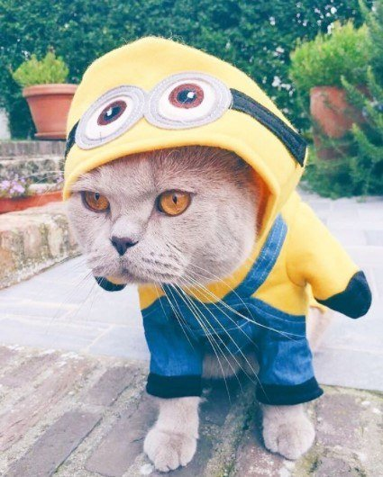 Funny-Cat-Outfits17 Funny Outfits For Cats – 20 Most Funny Clothes For Cats