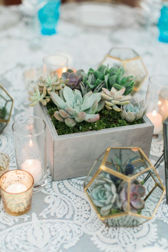 a modern wooden box with moss and various succulents and a geometric terrarium with them
